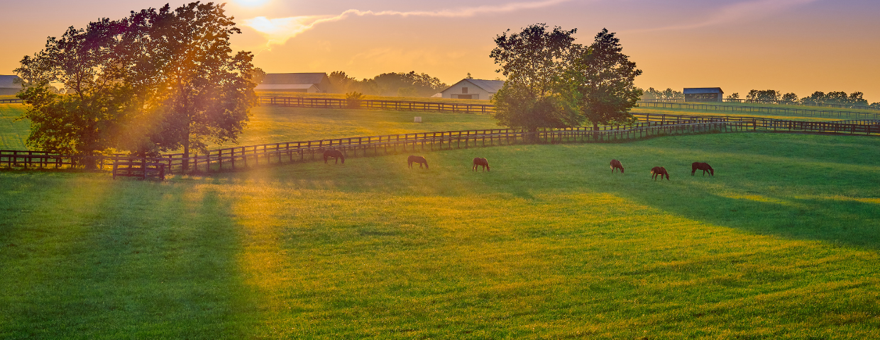 Horses eating grass in a pasture on an equestrian property.
