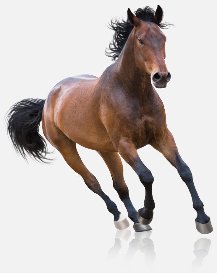 img-horse-running-Contact
