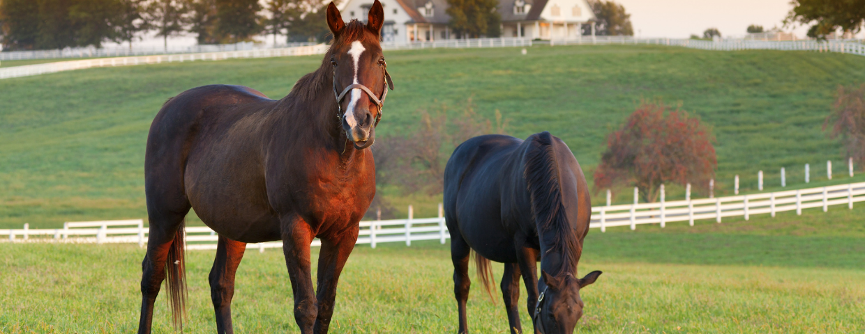 Two horses on an equestrian property eating grass.